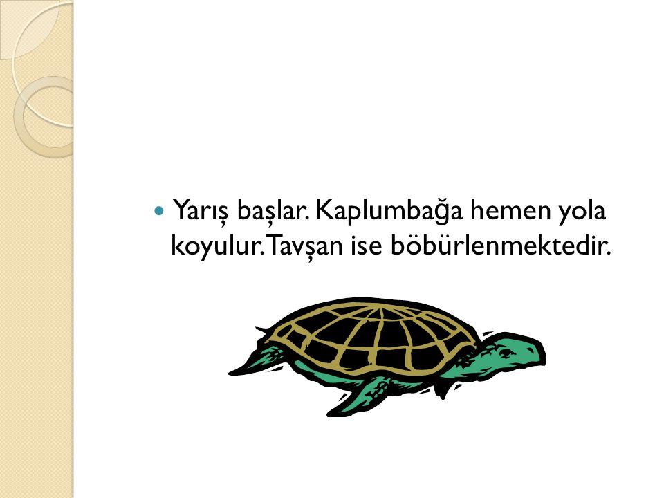 Yarış başlar. Kaplumbağa hemen yola koyulur