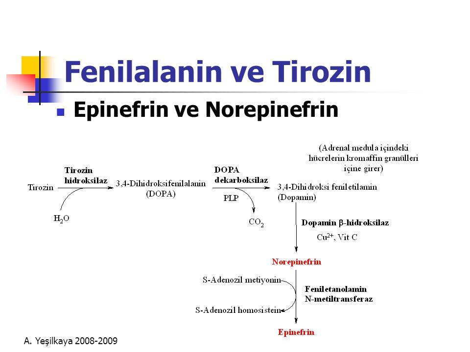 Fenilalanin ve Tirozin