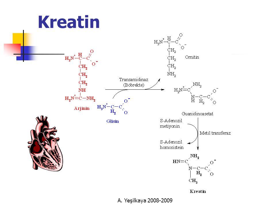 Kreatin A. Yeşilkaya 2008-2009