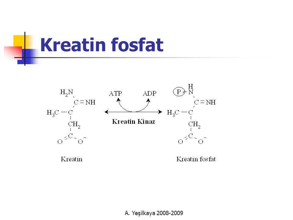 Kreatin fosfat A. Yeşilkaya 2008-2009