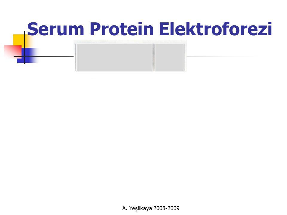 Serum Protein Elektroforezi
