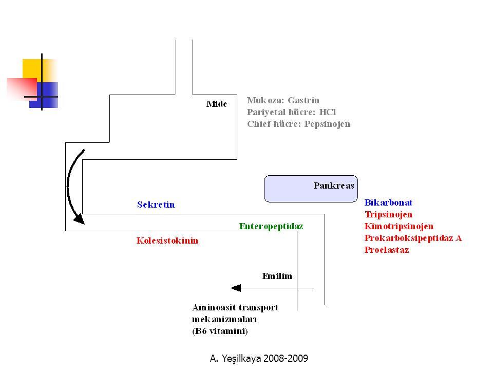A. Yeşilkaya 2008-2009