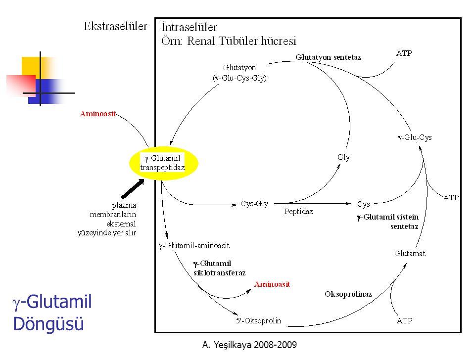 g-Glutamil Döngüsü A. Yeşilkaya 2008-2009