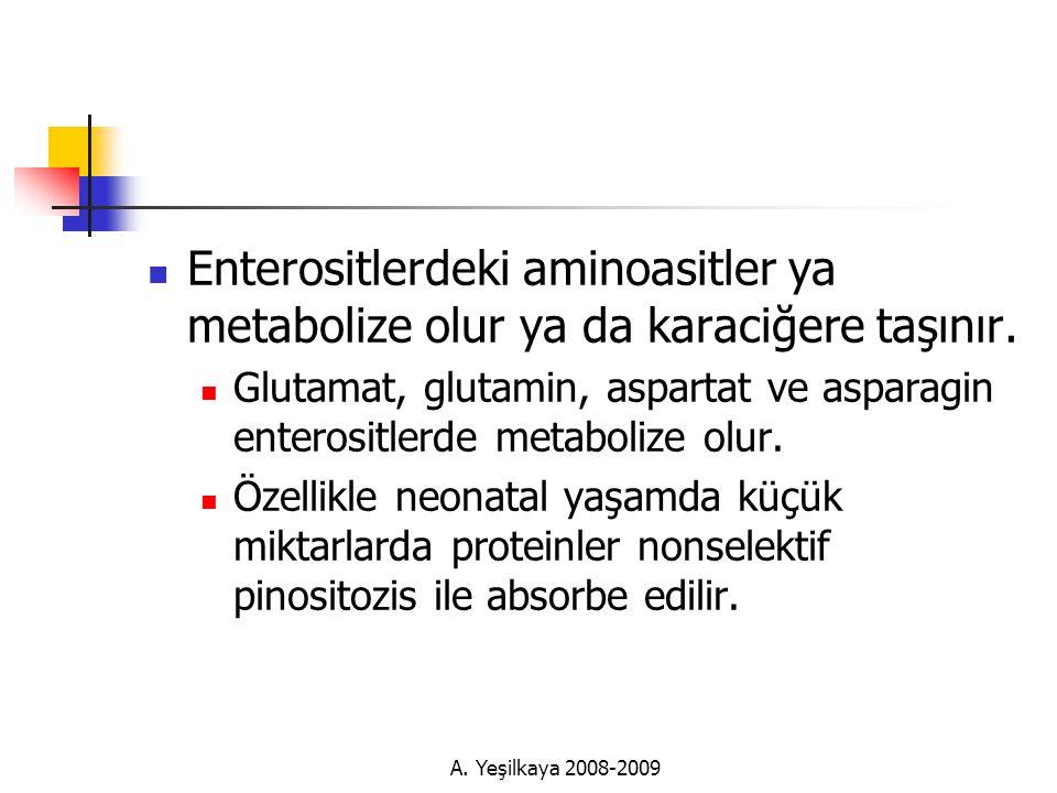 Enterositlerdeki aminoasitler ya metabolize olur ya da karaciğere taşınır.