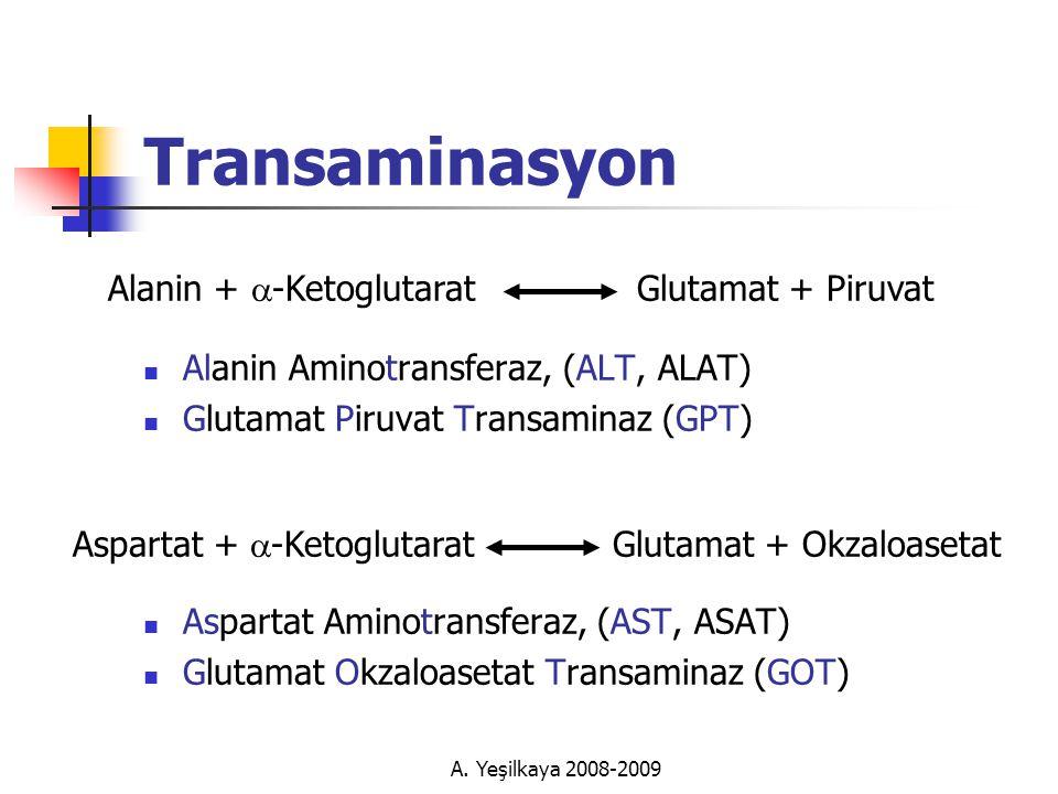 Transaminasyon Alanin + a-Ketoglutarat Glutamat + Piruvat