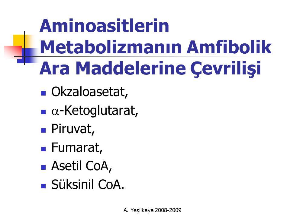 Aminoasitlerin Metabolizmanın Amfibolik Ara Maddelerine Çevrilişi