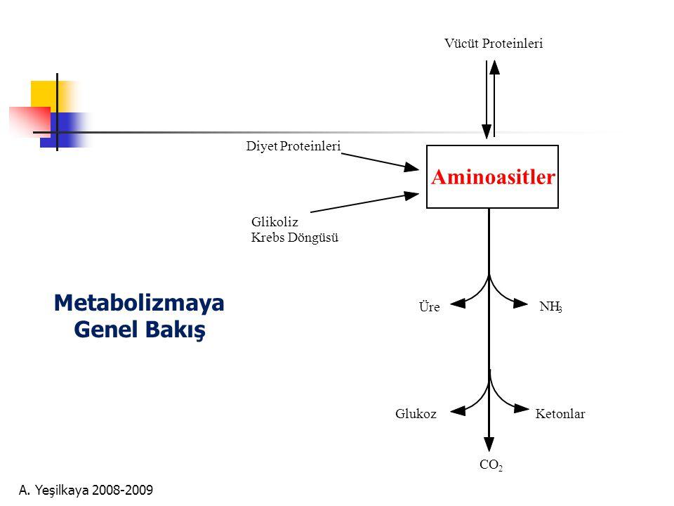 Metabolizmaya Genel Bakış