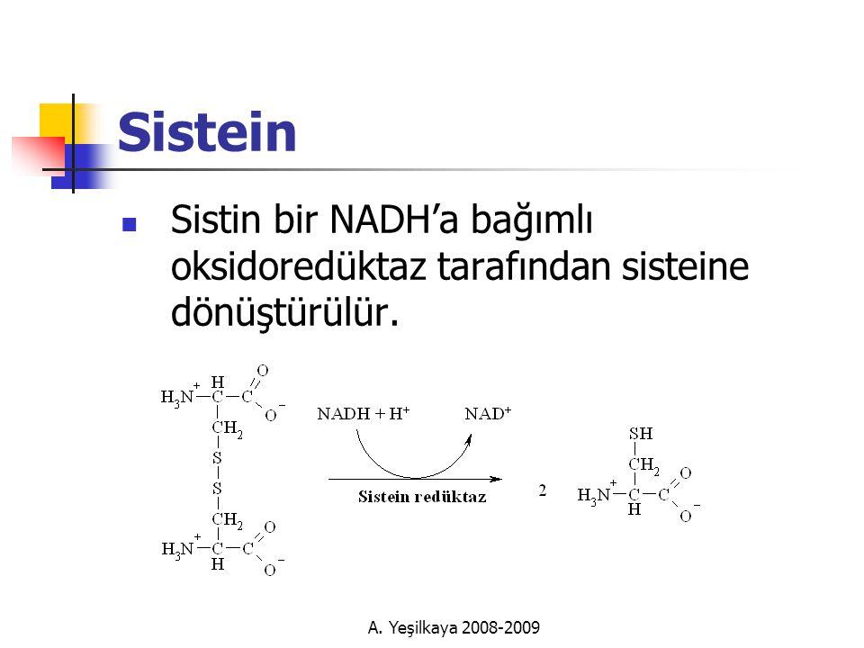 Sistein Sistin bir NADH'a bağımlı oksidoredüktaz tarafından sisteine dönüştürülür.