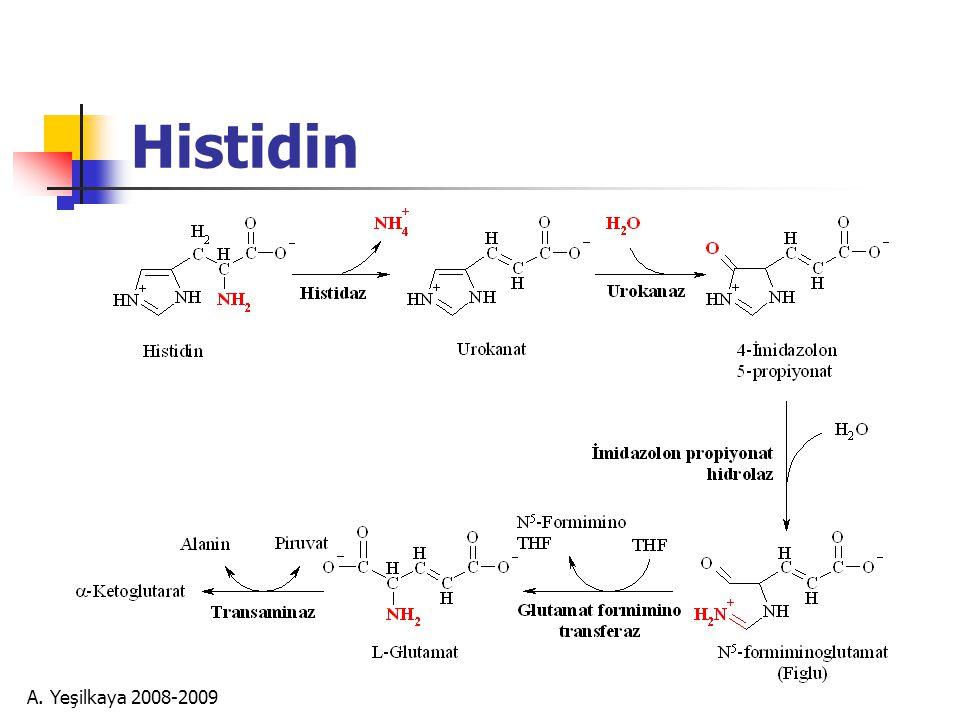 Histidin A. Yeşilkaya 2008-2009