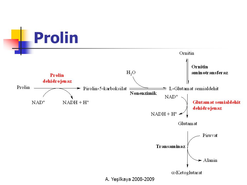 Prolin A. Yeşilkaya 2008-2009