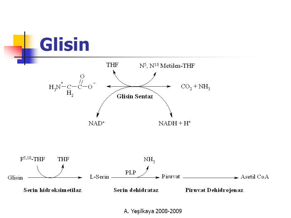Glisin A. Yeşilkaya 2008-2009
