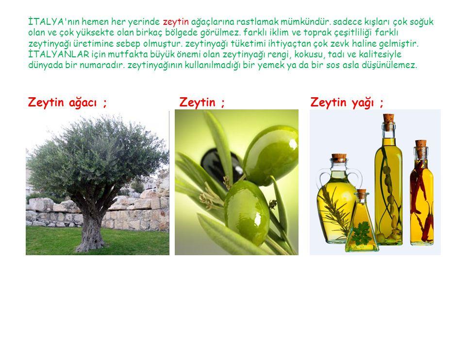 Zeytin ağacı ; Zeytin ; Zeytin yağı ;