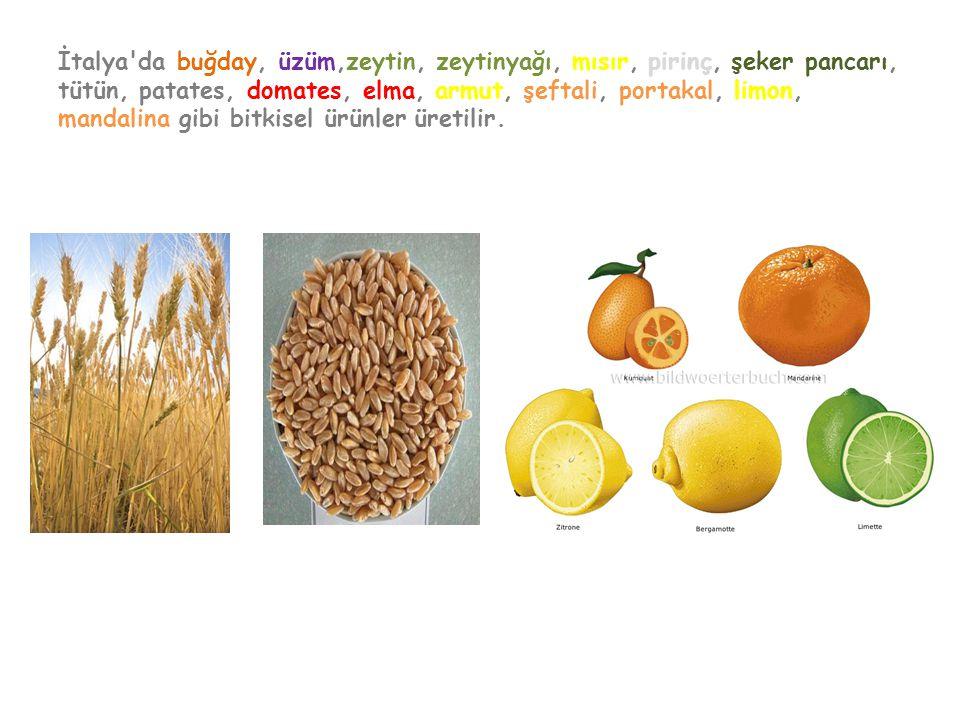 İtalya da buğday, üzüm,zeytin, zeytinyağı, mısır, pirinç, şeker pancarı, tütün, patates, domates, elma, armut, şeftali, portakal, limon, mandalina gibi bitkisel ürünler üretilir.