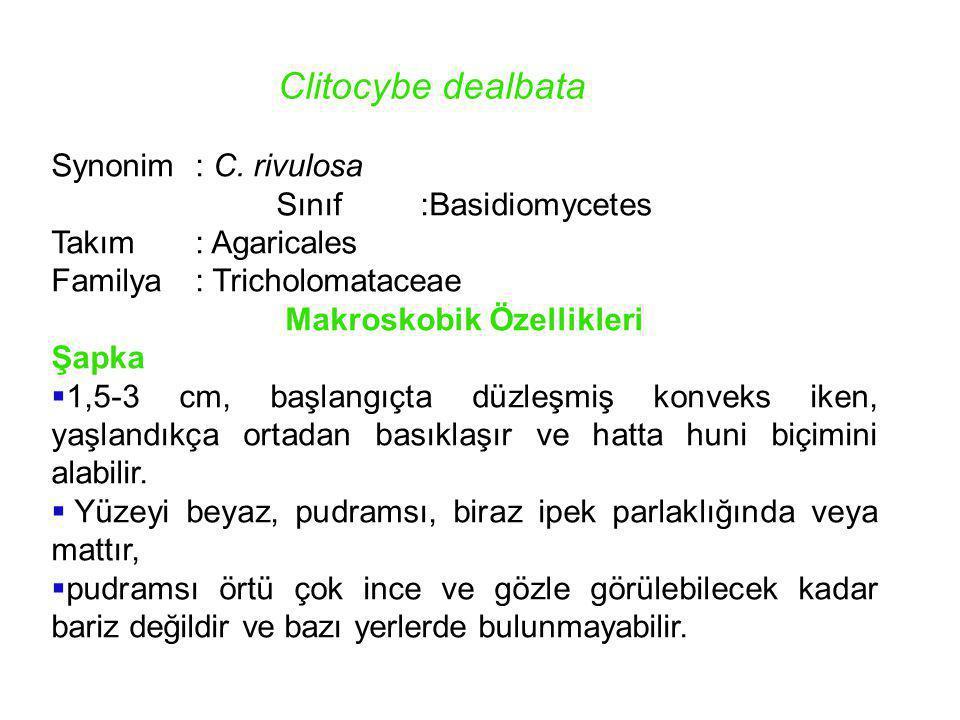 Makroskobik Özellikleri