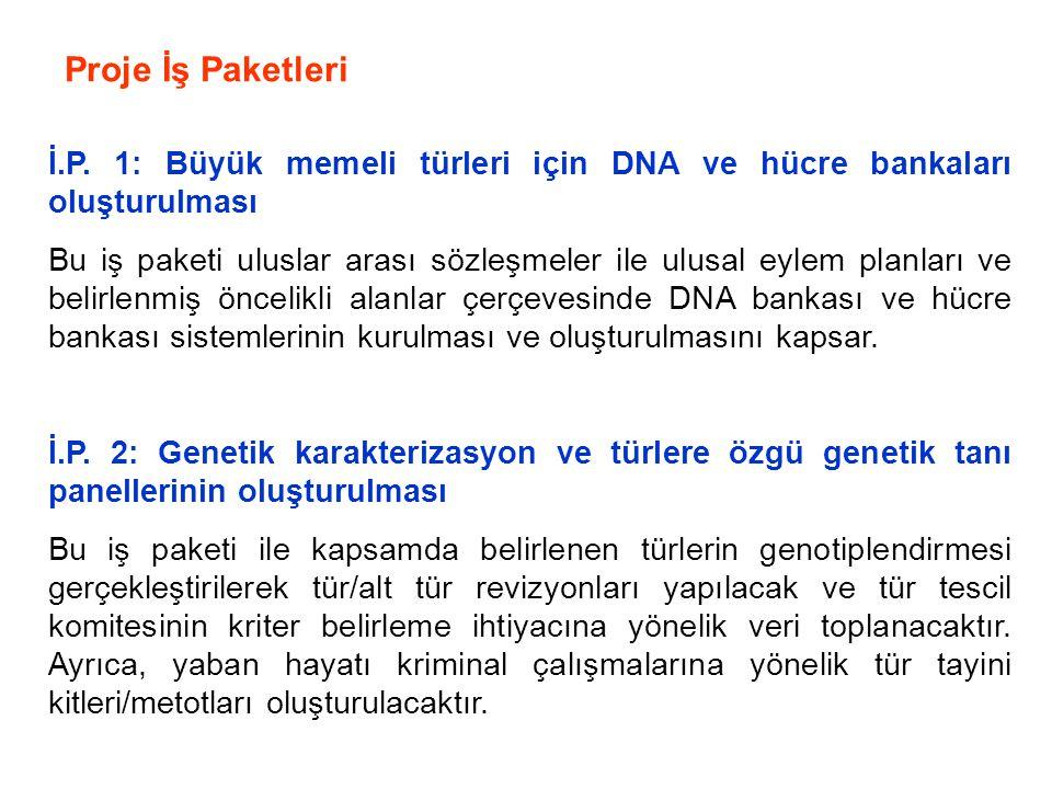 Proje İş Paketleri İ.P. 1: Büyük memeli türleri için DNA ve hücre bankaları oluşturulması.