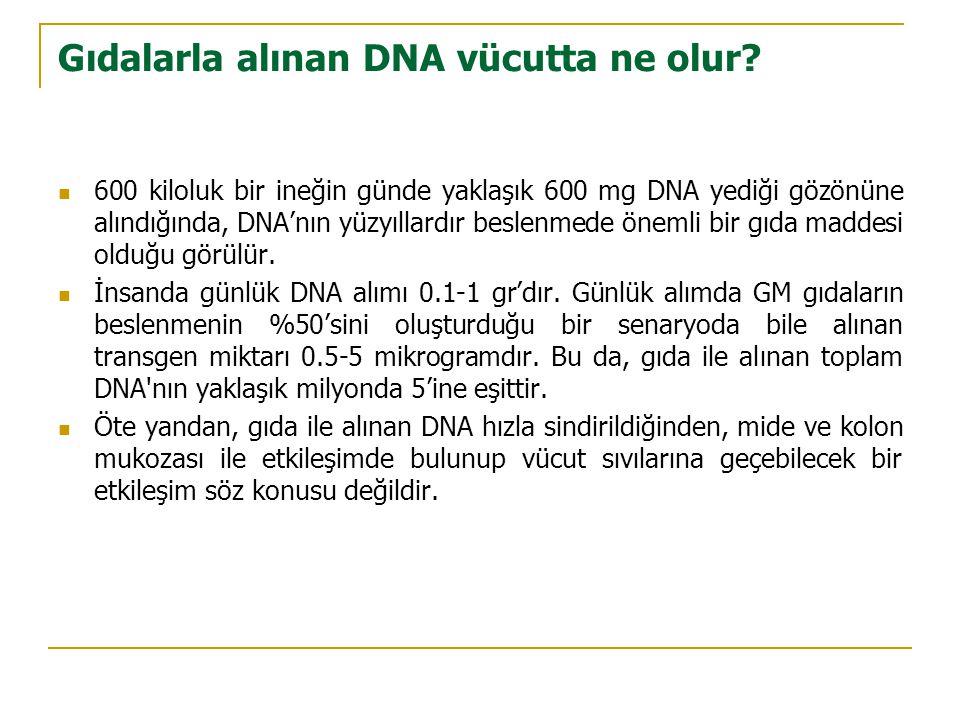 Gıdalarla alınan DNA vücutta ne olur