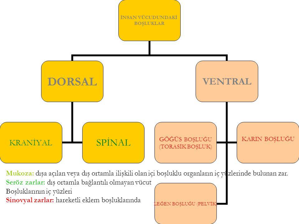 Mukoza: dışa açılan veya dış ortamla ilişkili olan içi boşluklu organların iç yüzlerinde bulunan zar.