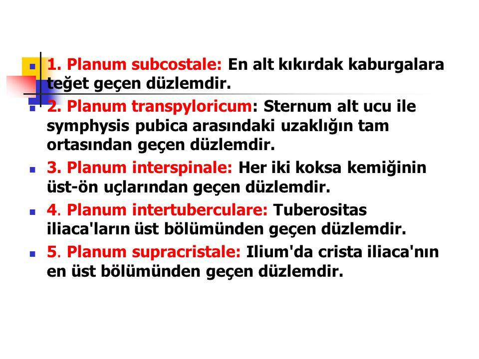 1. Planum subcostale: En alt kıkırdak kaburgalara teğet geçen düzlemdir.