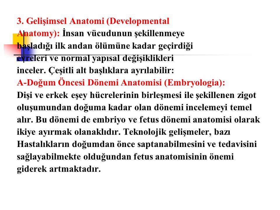 3. Gelişimsel Anatomi (Developmental