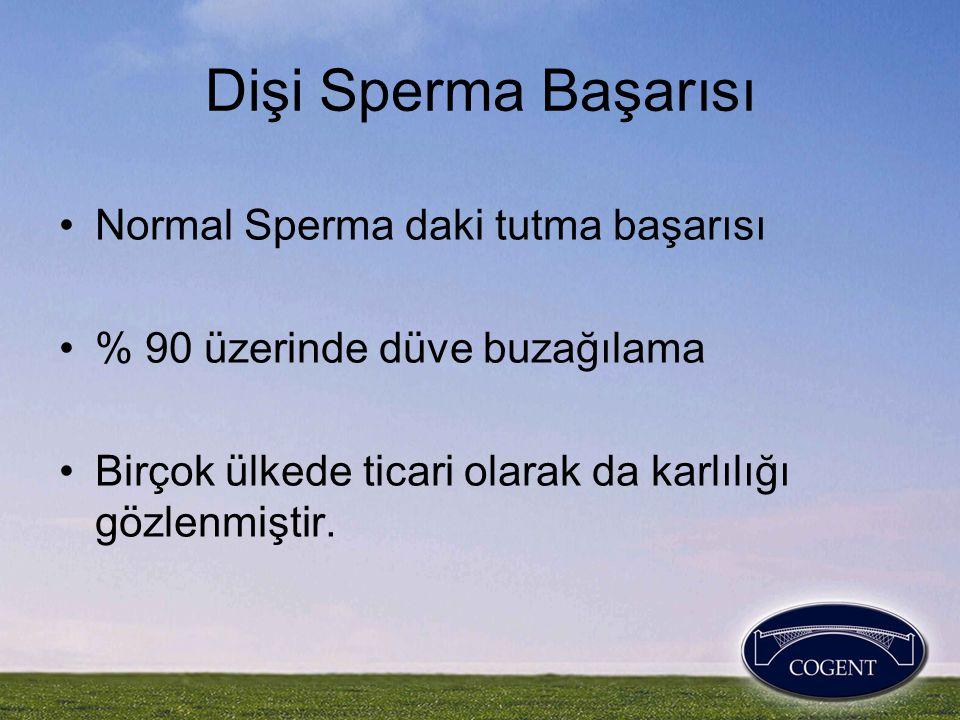 Dişi Sperma Başarısı Normal Sperma daki tutma başarısı