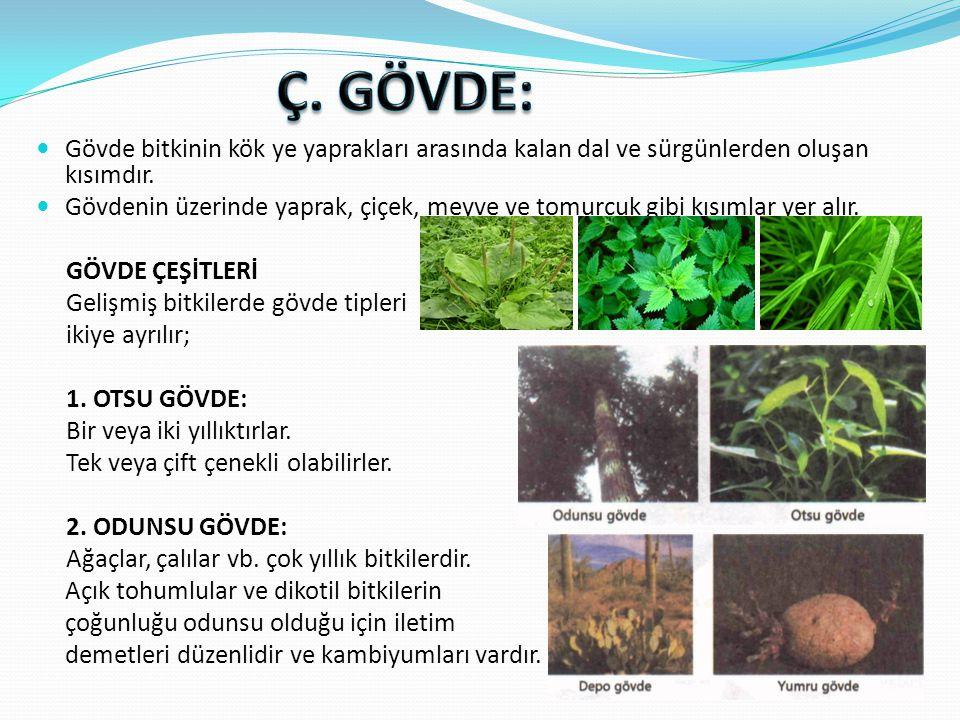 Ç. GÖVDE: Gövde bitkinin kök ye yaprakları arasında kalan dal ve sürgünlerden oluşan kısımdır.