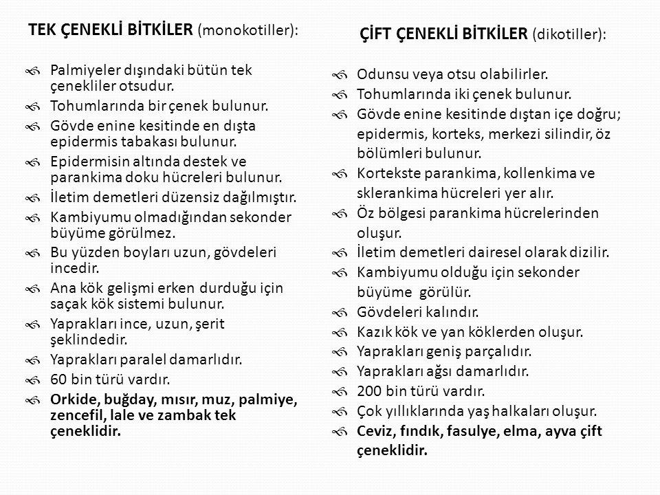 TEK ÇENEKLİ BİTKİLER (monokotiller):