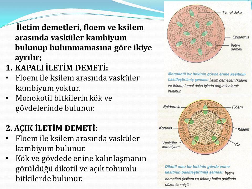 İletim demetleri, floem ve ksilem arasında vasküler kambiyum bulunup bulunmamasına göre ikiye ayrılır;
