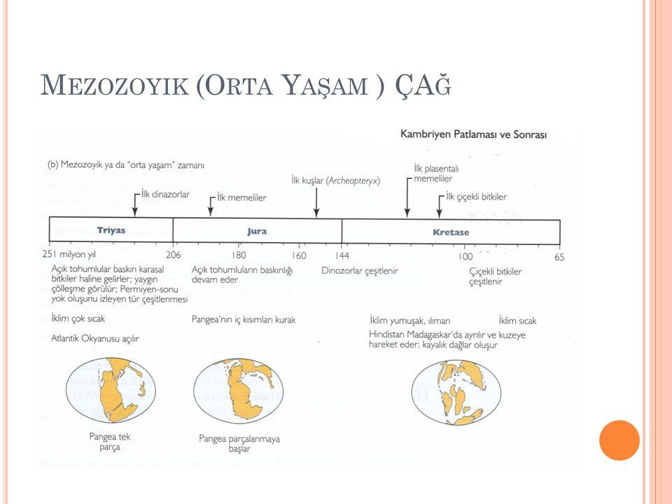 Mezozoyik (Orta Yaşam ) ÇAğ