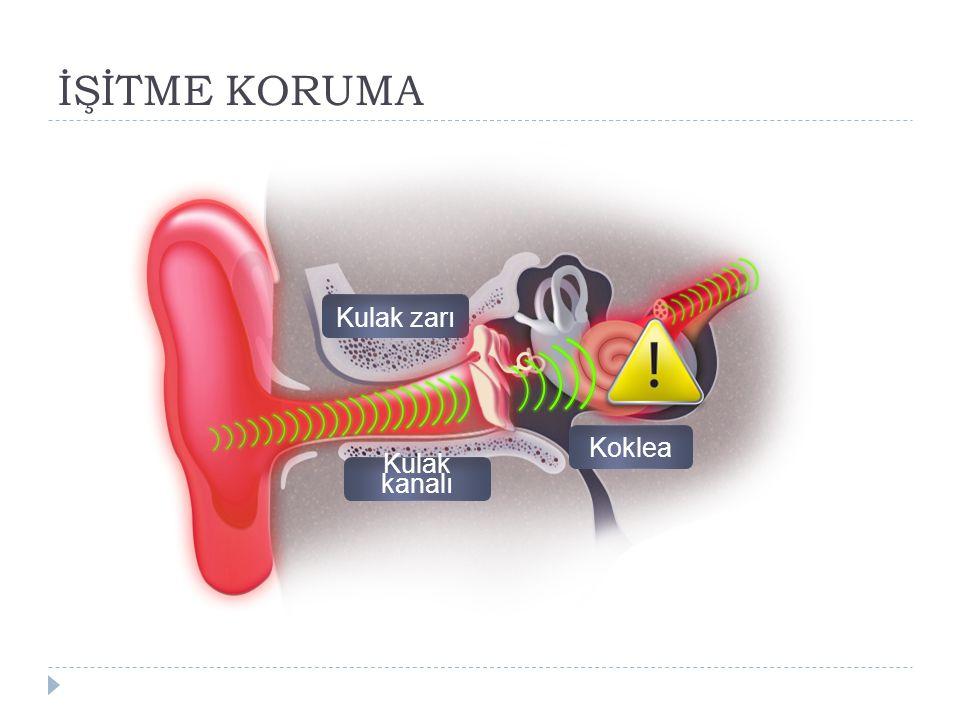 İŞİTME KORUMA Kulak zarı Koklea Kulak kanalı