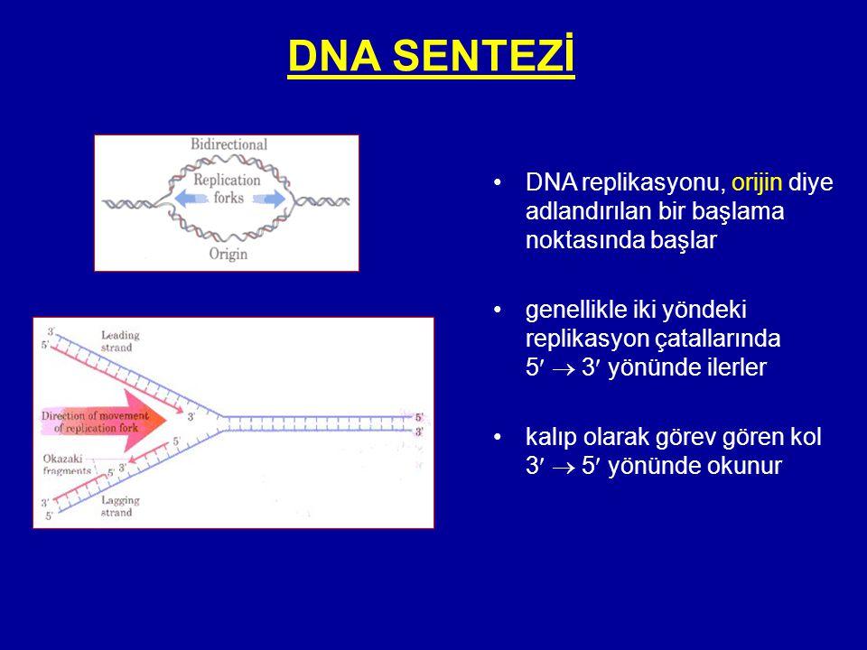 DNA SENTEZİ DNA replikasyonu, orijin diye adlandırılan bir başlama noktasında başlar.