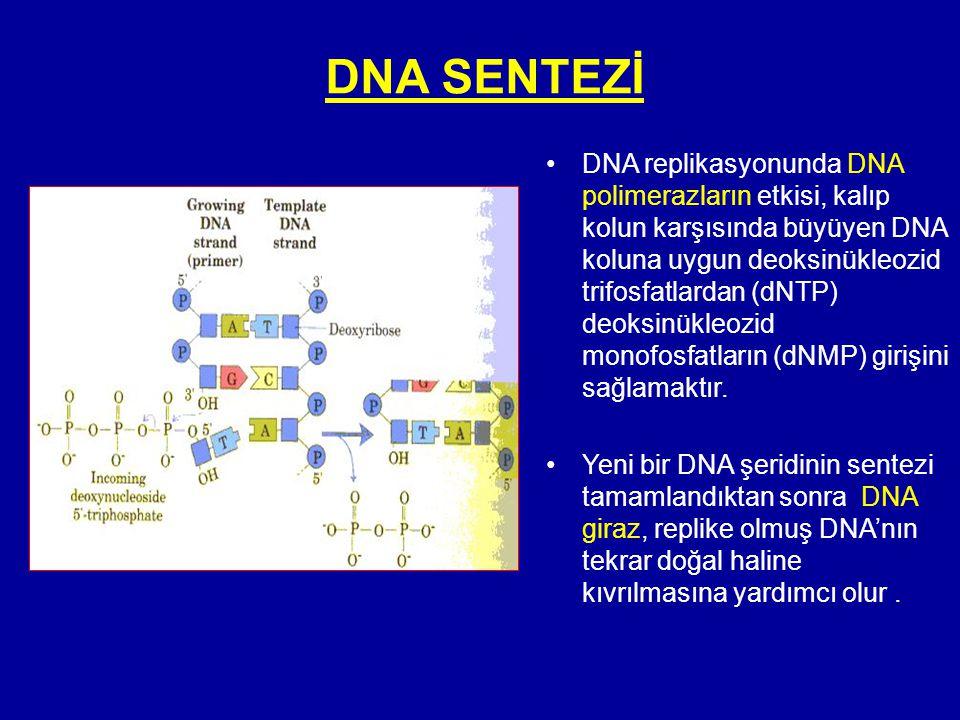 DNA SENTEZİ