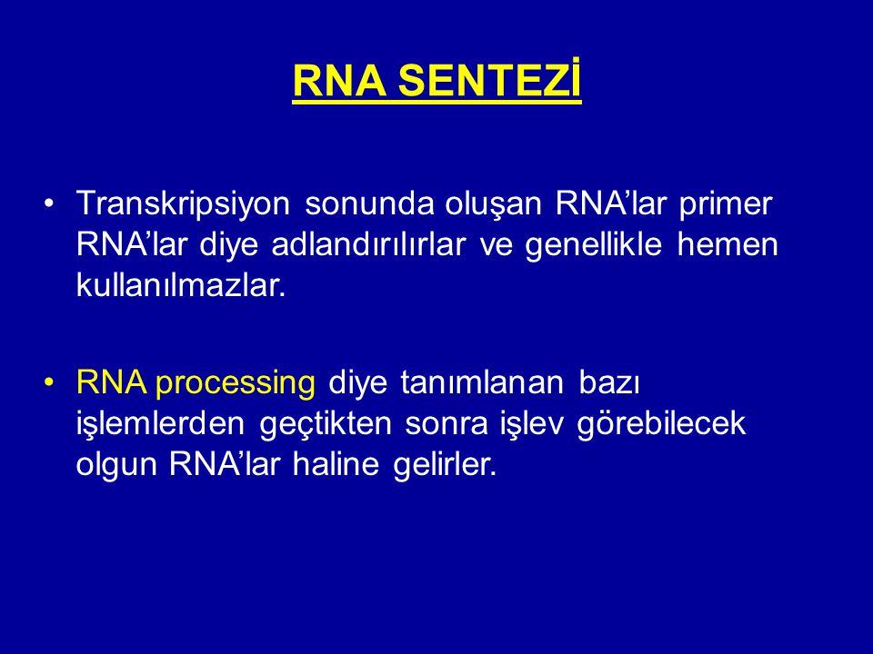 RNA SENTEZİ Transkripsiyon sonunda oluşan RNA'lar primer RNA'lar diye adlandırılırlar ve genellikle hemen kullanılmazlar.