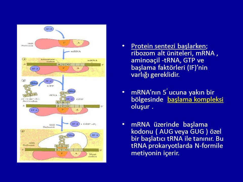 Protein sentezi başlarken; ribozom alt üniteleri, mRNA , aminoaçil -tRNA, GTP ve başlama faktörleri (IF)'nin varlığı gereklidir.