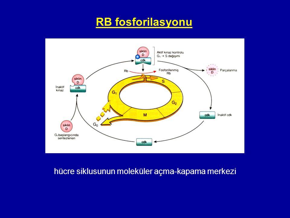 hücre siklusunun moleküler açma-kapama merkezi