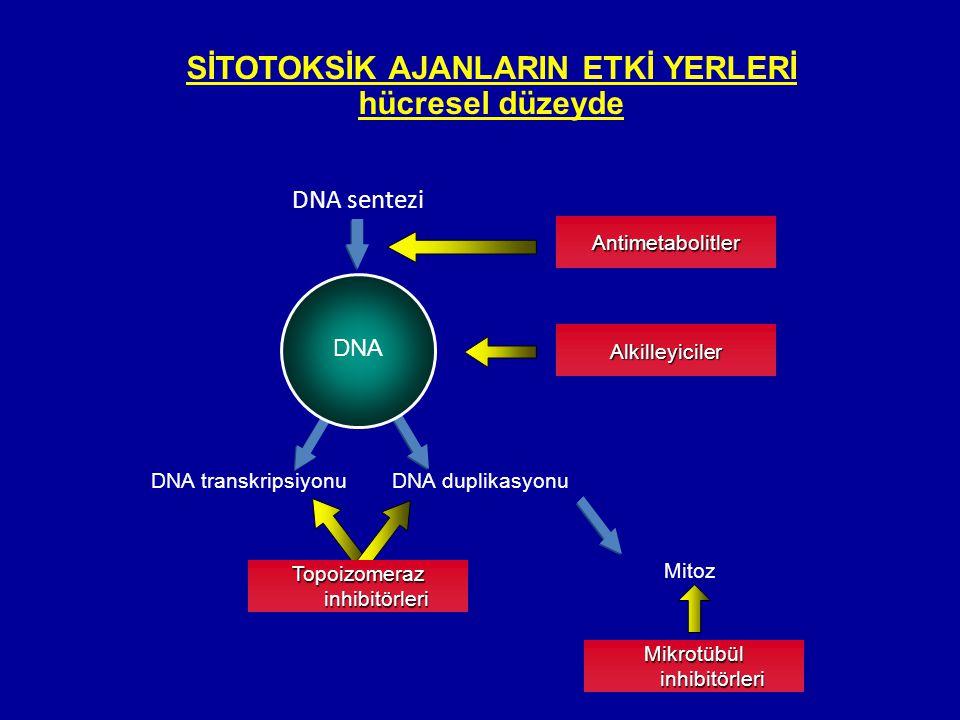 SİTOTOKSİK AJANLARIN ETKİ YERLERİ hücresel düzeyde