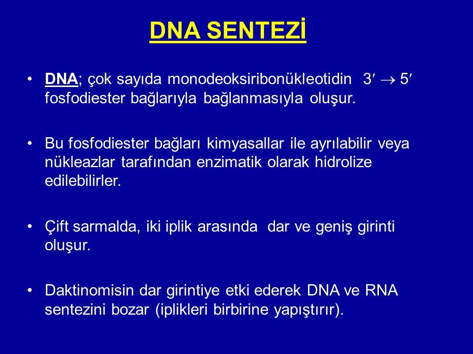DNA SENTEZİ DNA; çok sayıda monodeoksiribonükleotidin 3  5 fosfodiester bağlarıyla bağlanmasıyla oluşur.