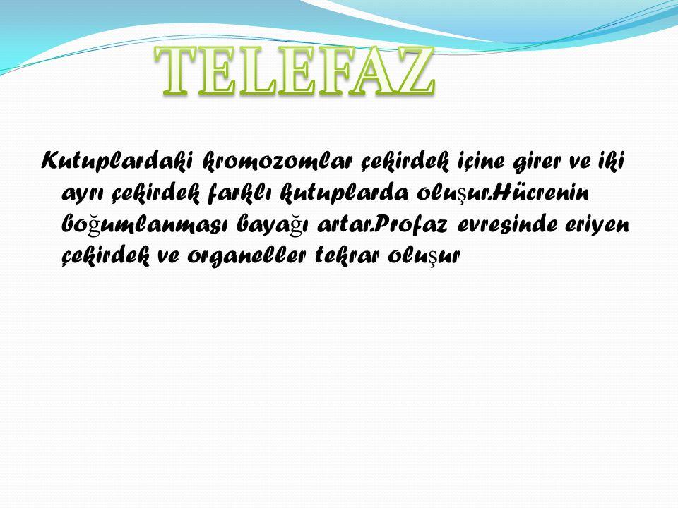 TELEFAZ