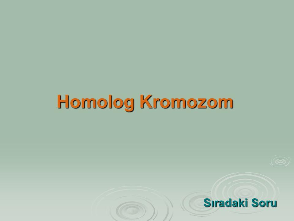 Homolog Kromozom Sıradaki Soru