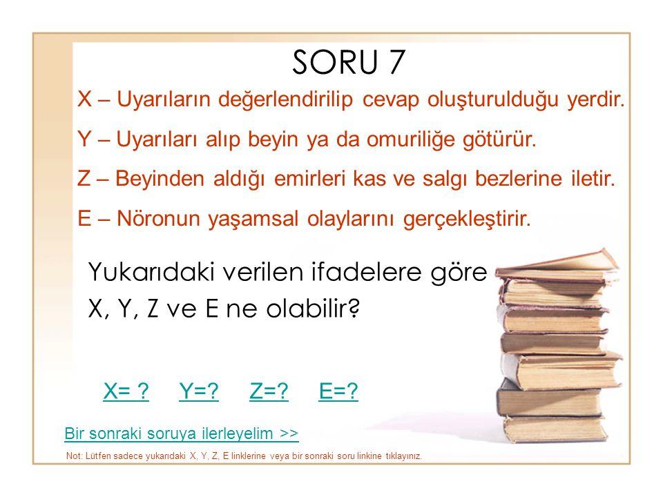 SORU 7 Yukarıdaki verilen ifadelere göre X, Y, Z ve E ne olabilir