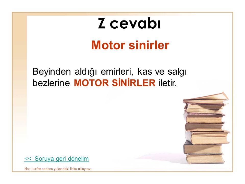 Z cevabı Motor sinirler