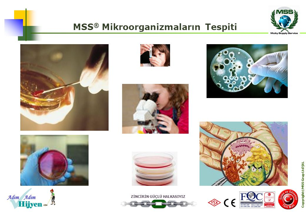 MSS® Mikroorganizmaların Tespiti Copyright©MSS Grup Ltd Şti.