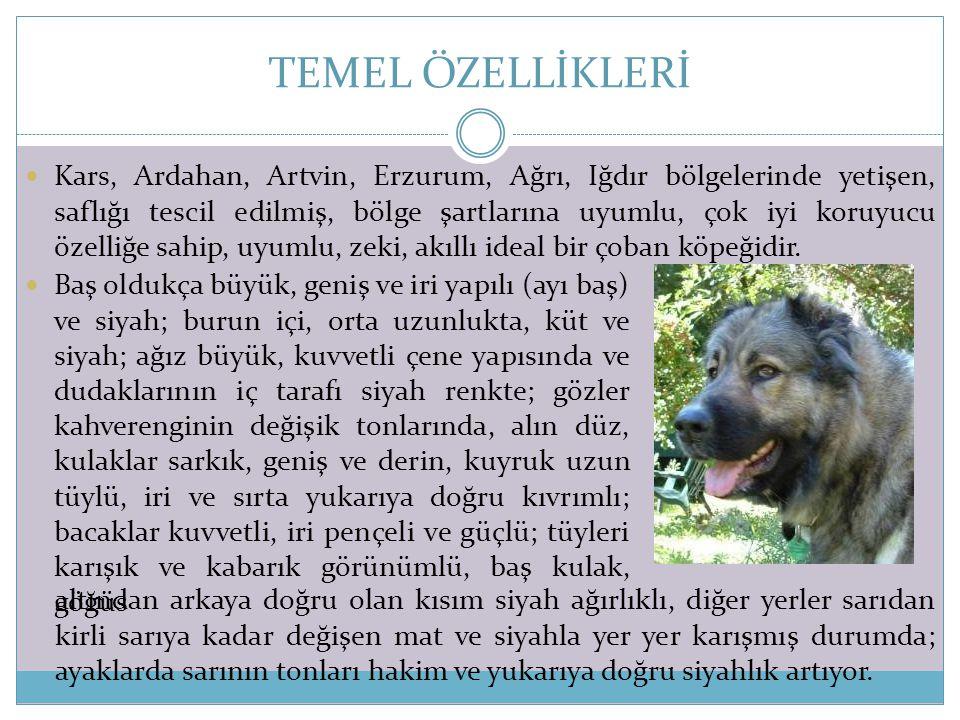 TEMEL ÖZELLİKLERİ
