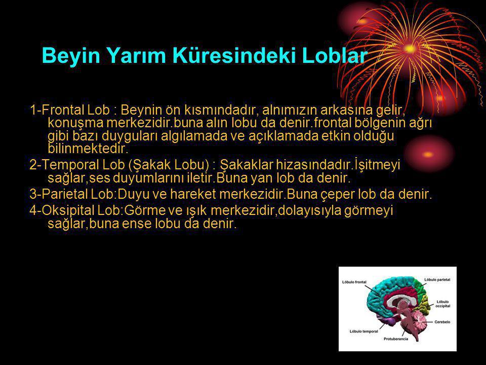 Beyin Yarım Küresindeki Loblar