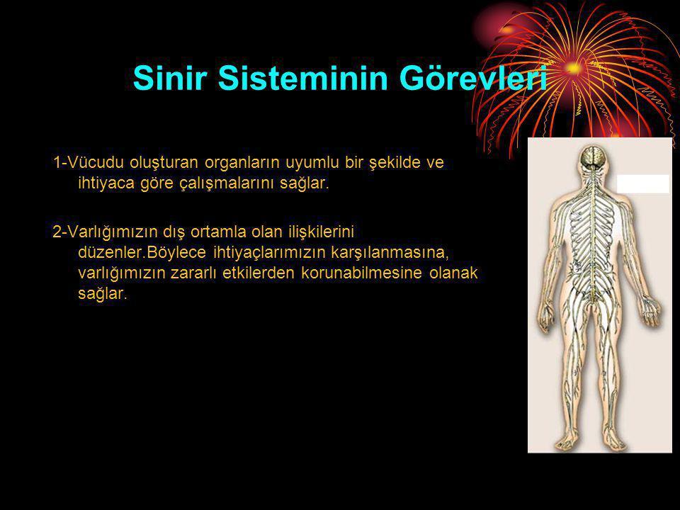 Sinir Sisteminin Görevleri