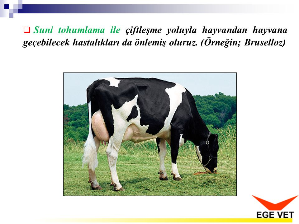 Suni tohumlama ile çiftleşme yoluyla hayvandan hayvana geçebilecek hastalıkları da önlemiş oluruz.