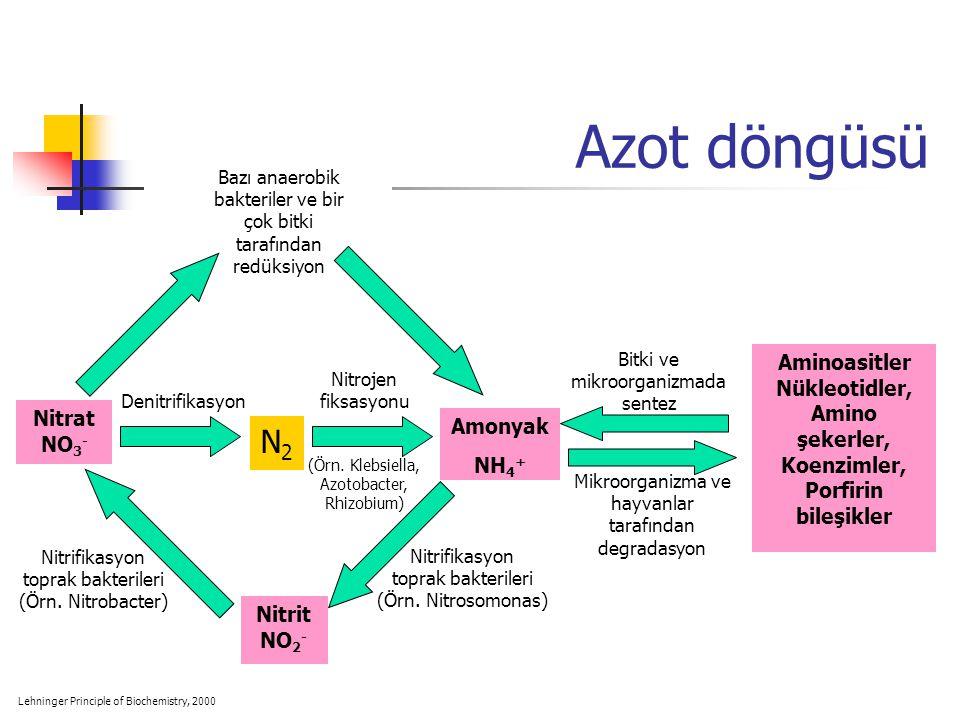 Aminoasitler Nükleotidler,