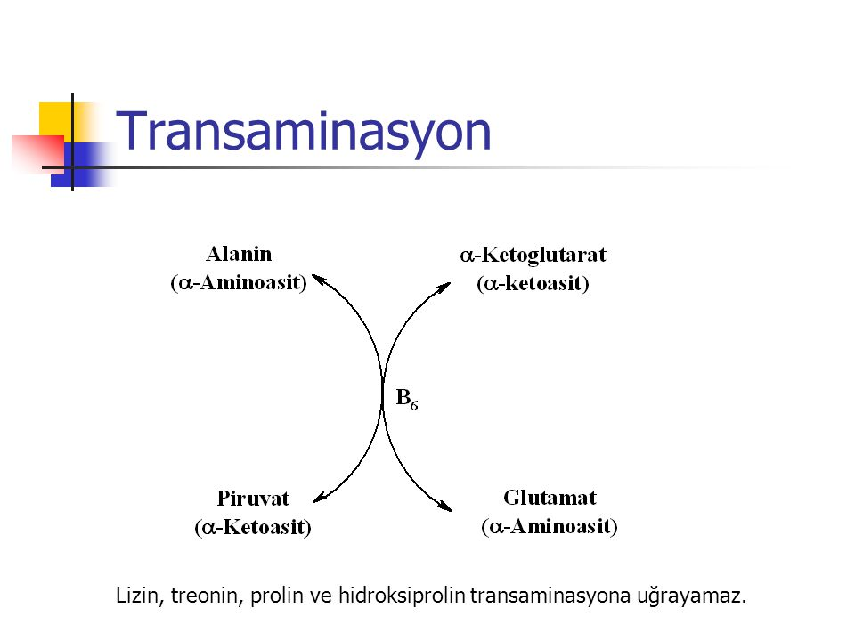 Lizin, treonin, prolin ve hidroksiprolin transaminasyona uğrayamaz.