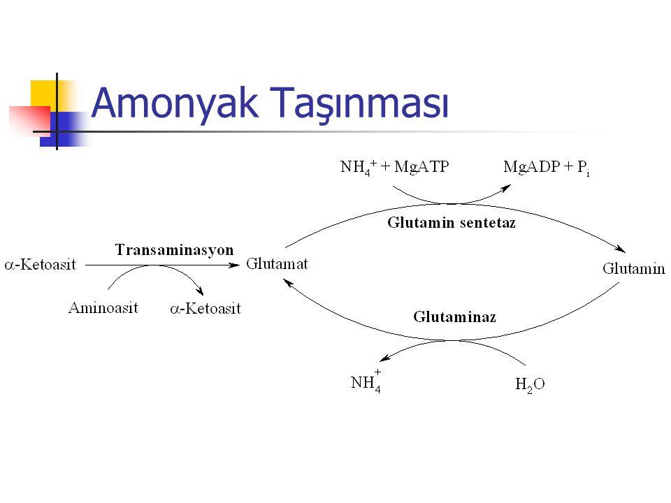 Amonyak Taşınması