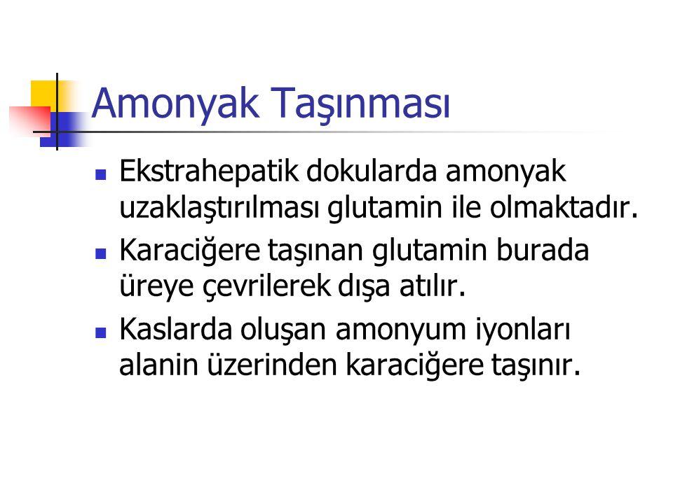 Amonyak Taşınması Ekstrahepatik dokularda amonyak uzaklaştırılması glutamin ile olmaktadır.