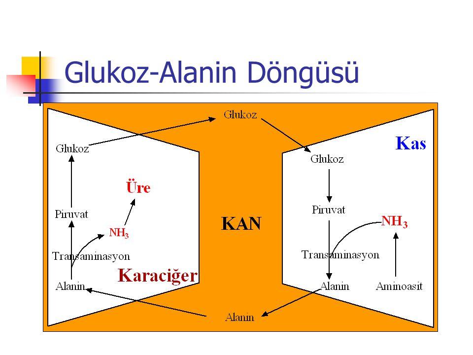 Glukoz-Alanin Döngüsü